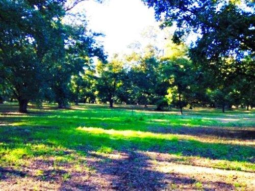 Lauren Grove : Statesboro : Bulloch County : Georgia