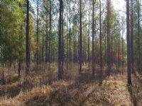 Kiokee Preserve : Albany : Terrell County : Georgia
