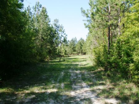 River Hill Farm : Chattahoochee : Gadsden County : Florida