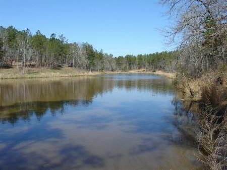 195 Acres : Greenville : Butler County : Alabama