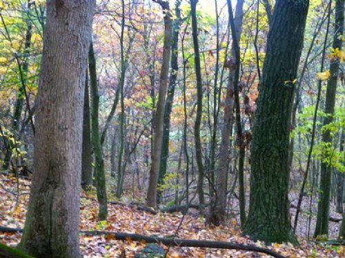 Spectacular 89+/- Acres : Avoca : Iowa County : Wisconsin