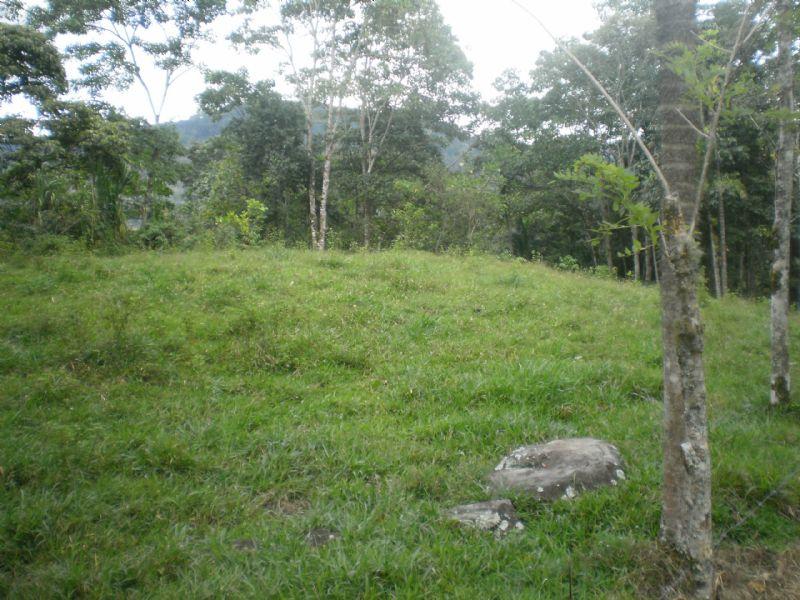 57 Ac. Riverfront Cattle Farm : Tucurrique Cartago : Costa Rica
