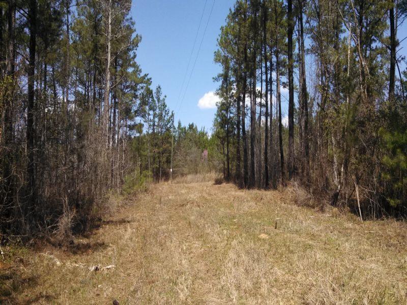Great Hunting Property : Forsyth : Monroe County : Georgia
