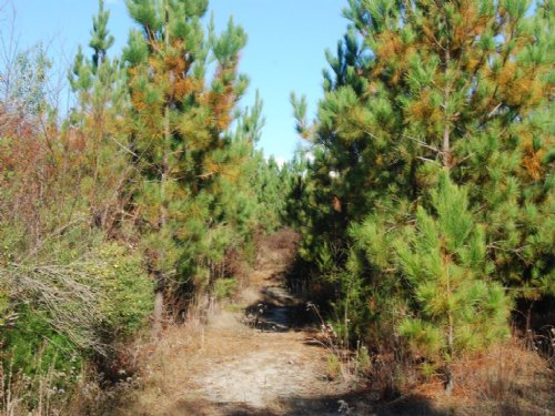 61 Acre Hunting Property Near Santu : Carlisle : Union County : South Carolina