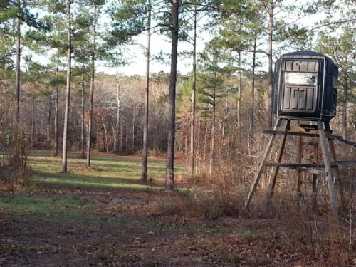 Excellent +-55 Acre Hunting Tract : Ellaville : Schley County : Georgia