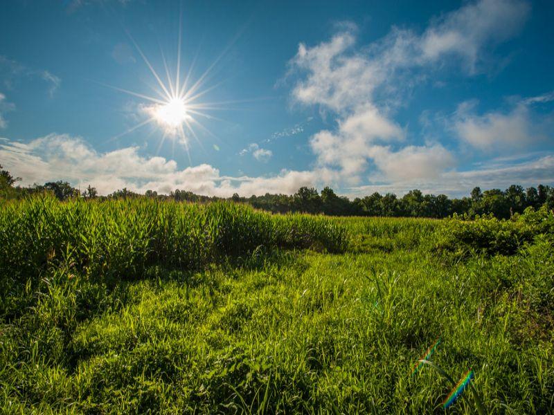Strader Farm : Reidsville : Rockingham County : North Carolina