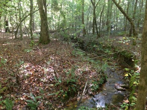 40 Acres On County Road 62 : Heflin : Cleburne County : Alabama