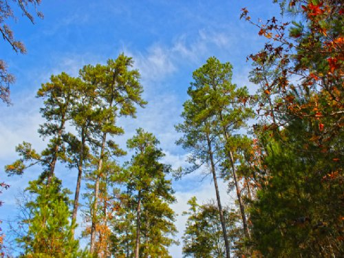 710 Acres I-45 West : Huntsville : Walker County : Texas