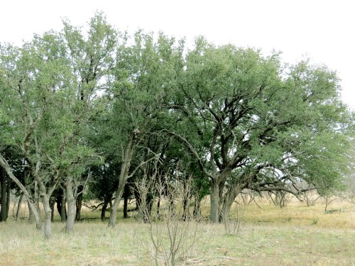 Mesquite Springs Ranch, 15 : Menard County : Texas