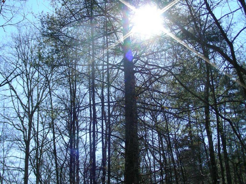 Livingston Tract : Maretta : Greenville County : South Carolina
