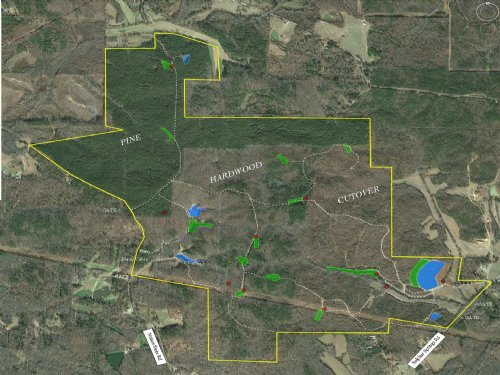875 Acres Timber, Deer & Turkey : Selmer : McNairy County : Tennessee