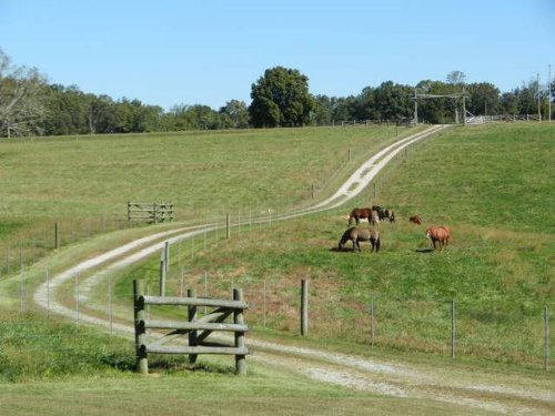 40 Acre Cattle/horse Farm : Bowdon : Carroll County : Georgia