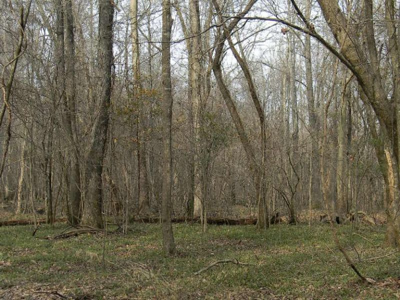 Outstanding Mature Hardwood Timber : Perote : Bullock County : Alabama
