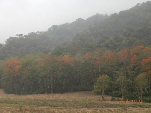 900 Acre Jungle Tract W/coffee : Turrialba Cartago : Costa Rica