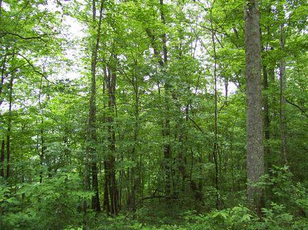 Mcdowell Tract : Carico : Jackson County : Kentucky