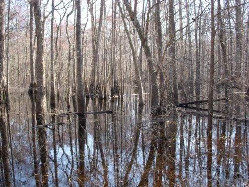 Ebenezer Creek Tract : Springfield : Effingham County : Georgia