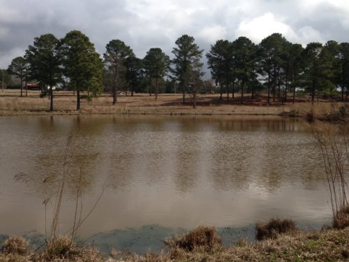 14.83 +/- Ac Of Pasture & 2 Ponds : Goshen : Pike County : Alabama