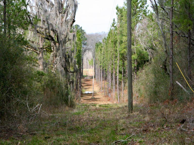 Sheppard Family Farm : Blakely : Early County : Georgia