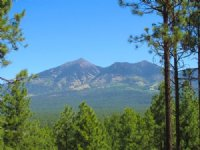 Flagstaff Arizona Forested Estates