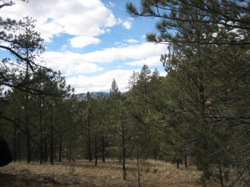 76 Ac Bank Owned Mtn Property : Canon City : Fremont County : Colorado