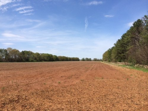 Income-producing Row Crop + Timber : Americus : Sumter County : Georgia