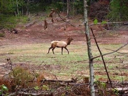 Turn Key Hunting Ranch : Arthur City : Lamar County : Texas