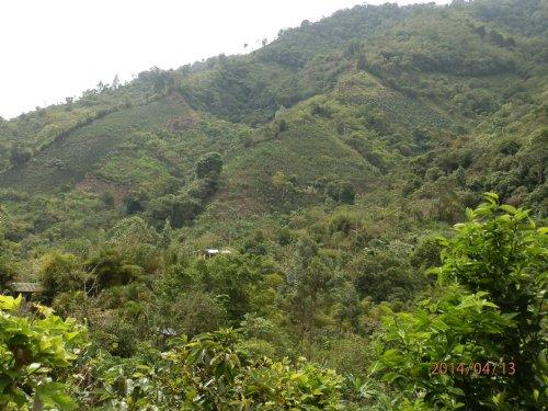 Mountain 10 Ac.mini Farm- : Orosi Valley : Costa Rica