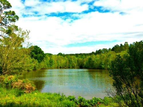 Hidden Lakes : Cobbtown : Tattnall County : Georgia