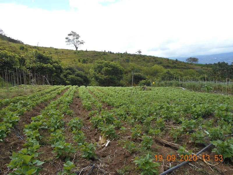 69 Acre Vegetable Farm, River : Orosi Valley : Costa Rica