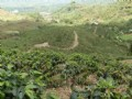 69 Ac. Coffee Farm W/ River : Orosi Valley : Costa Rica