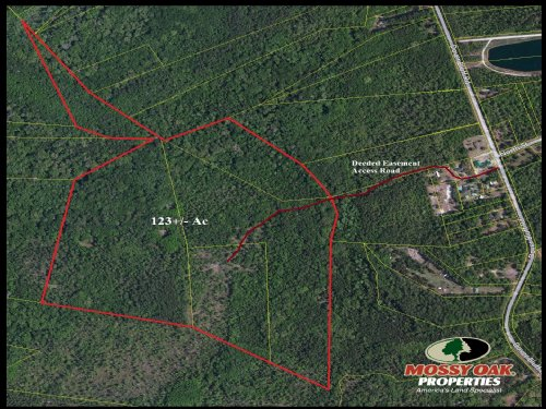 122+/- Acres Estate Owned Land : Waverly : Camden County : Georgia