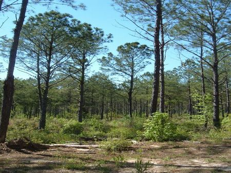 400 Acres Of Prime Property : Opp : Covington County : Alabama