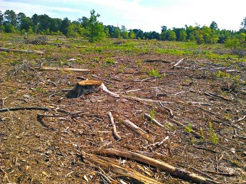 Lonesome Pine : Soperton : Treutlen County : Georgia