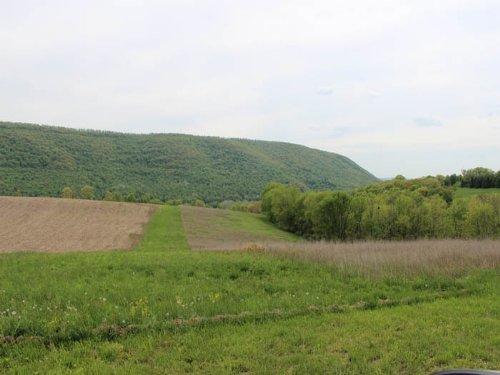 10.5 +/- Acres Of Land : Orangeville : Columbia County : Pennsylvania