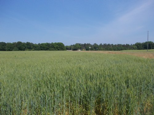 28 Acre Farm In Holtville : Holtville : Elmore County : Alabama