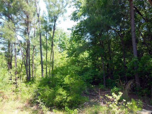 66-048 Pine Hill North Tract : Pine Hill : Wilcox County : Alabama