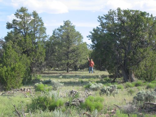 Forested Wilderness Ranch : St. Johns : Apache County : Arizona