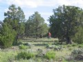 Forested Wilderness Ranch