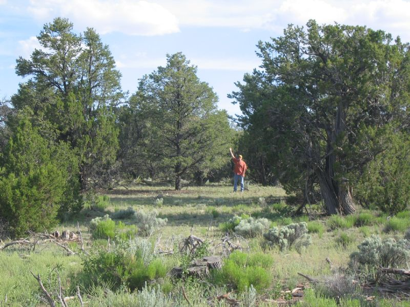 Forested Wilderness Ranch : Saint Johns : Apache County : Arizona