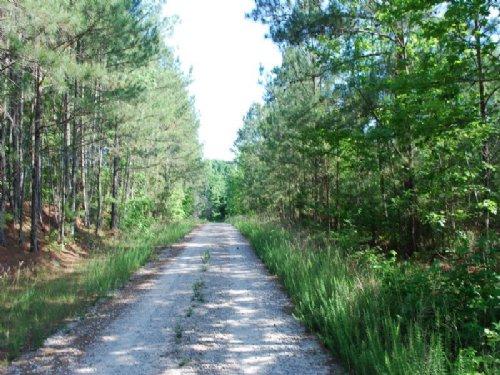 55 Acres Near National Forest : Union : South Carolina