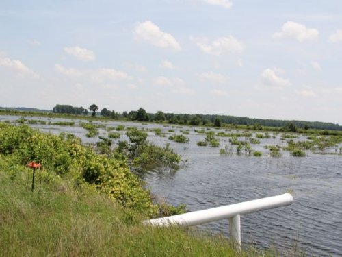 *sold*1474 Acre Farm : Lonoke : Arkansas