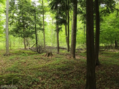 10 Acres In A Great Area To Hunt : Fountain : Mason County : Michigan