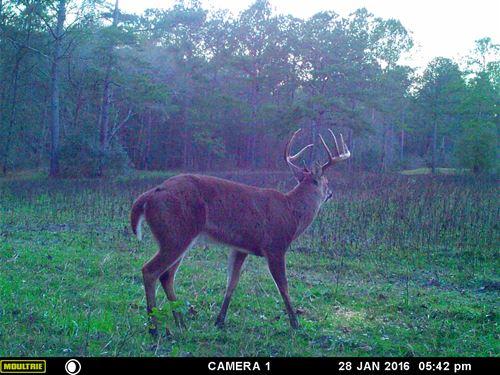 R & R Farm 142 Acres On Piscola : Quitman : Brooks County : Georgia