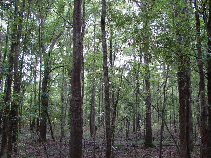 Big Timber Hunting Spot : Tuskegee : Macon County : Alabama