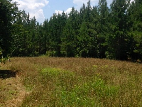 38 Acre Gentleman Farm - Hunting : Jesup : Wayne County : Georgia