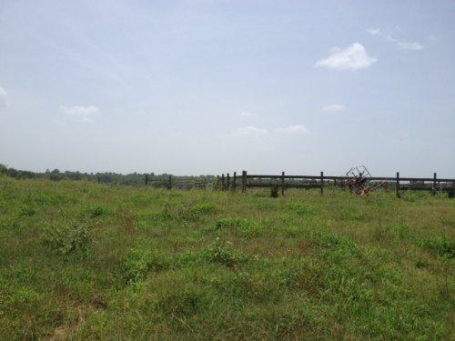 74.3 Acres Of Pasture : Lexington : Oglethorpe County : Georgia