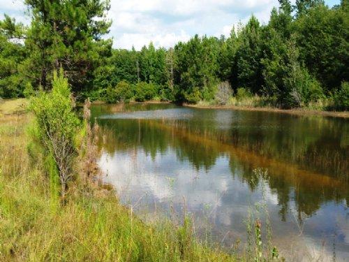 89 Acres Banks Pond Tract : Statesboro : Bulloch County : Georgia