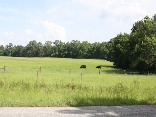 67 Acres : Saint Francisville : West Feliciana Parish : Louisiana