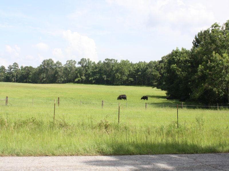 67 Acres : Saint Francisville : West Feliciana Parish : Louisiana