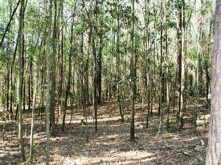 Still Waters Ridge : Quincy : Gadsden County : Florida
